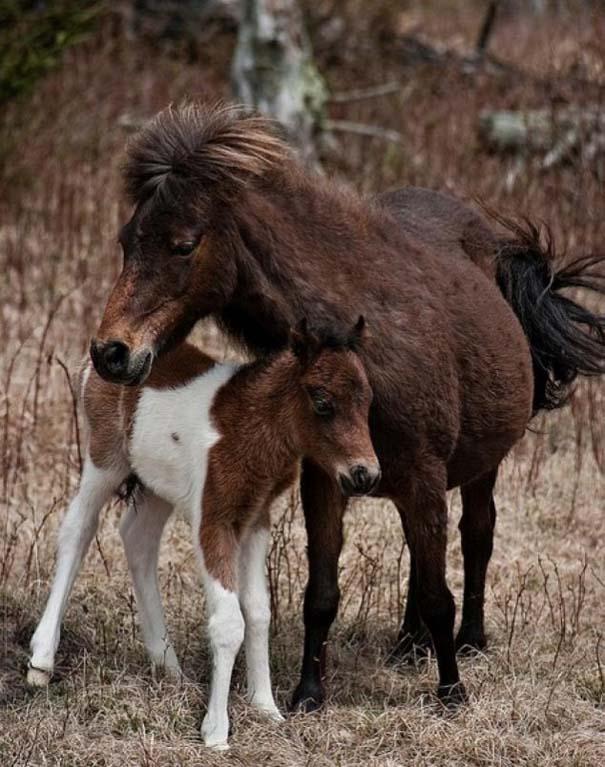 Ζώα με τα μικρά τους (20)