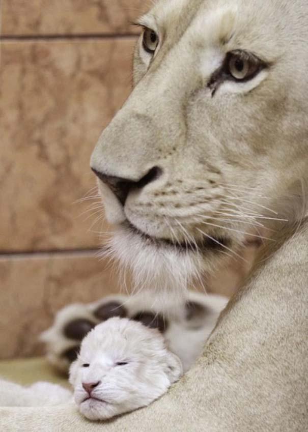 Ζώα με τα μικρά τους (22)