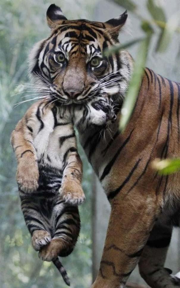 Ζώα με τα μικρά τους (25)