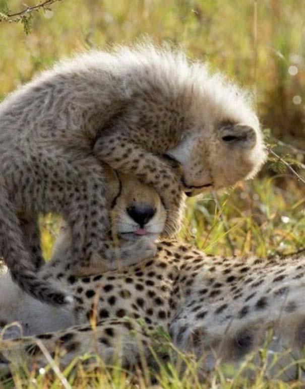 Ζώα με τα μικρά τους (28)