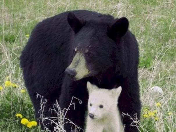 Ζώα με τα μικρά τους (31)
