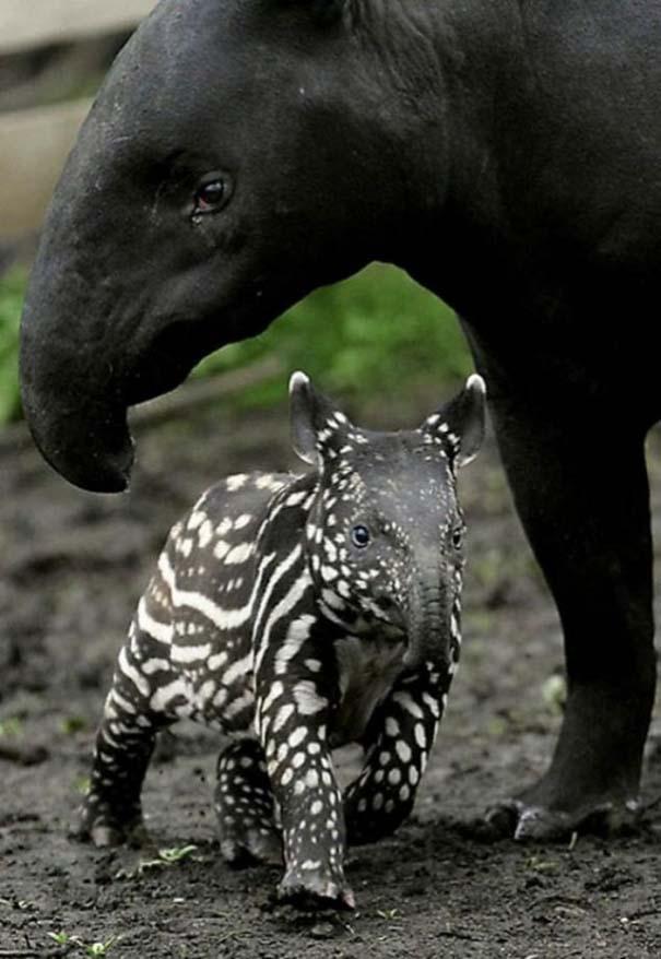 Ζώα με τα μικρά τους (35)