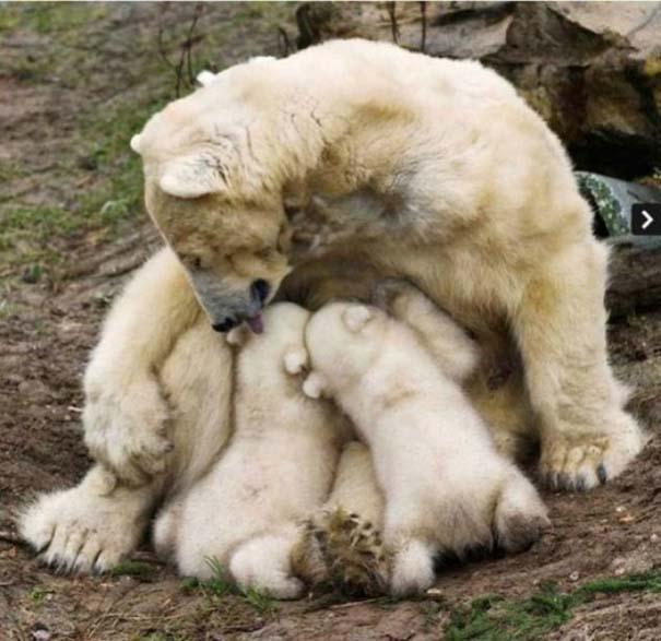 Ζώα με τα μικρά τους (38)