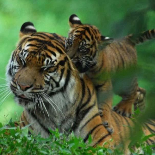 Ζώα με τα μικρά τους (46)