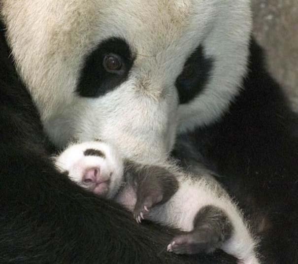Ζώα με τα μικρά τους (47)