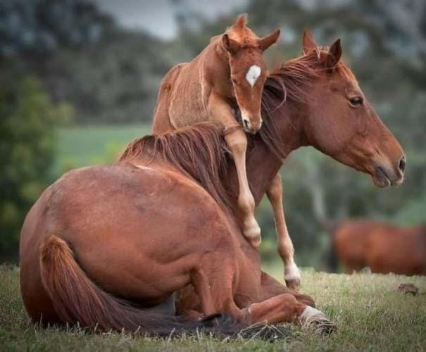 Ζώα με τα μικρά τους (48)