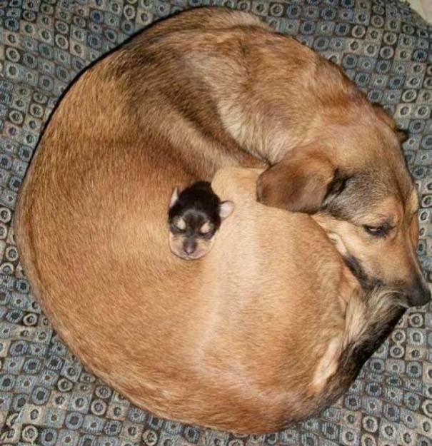 Ζώα με τα μικρά τους (50)