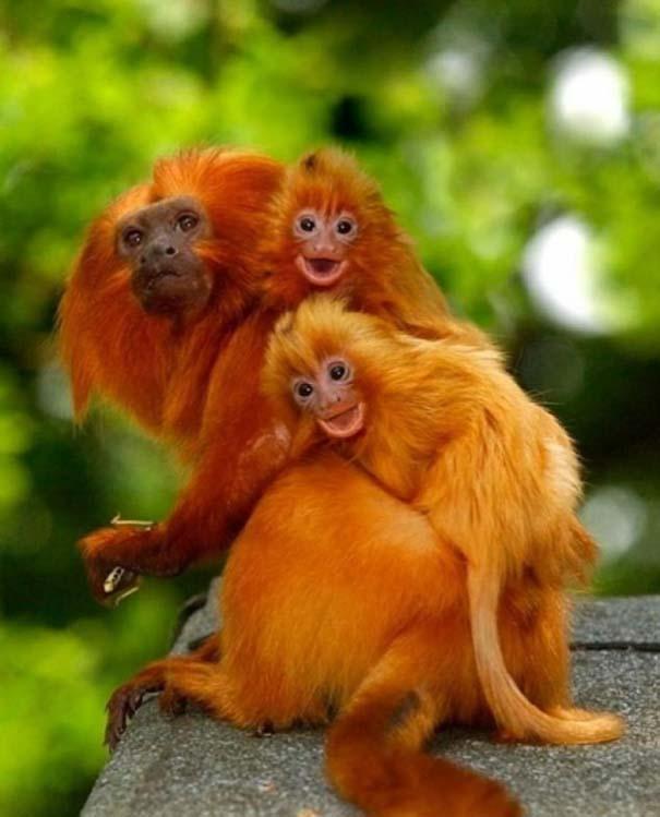 Ζώα με τα μικρά τους (51)