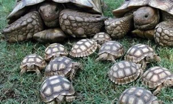 Ζώα με τα μικρά τους (55)