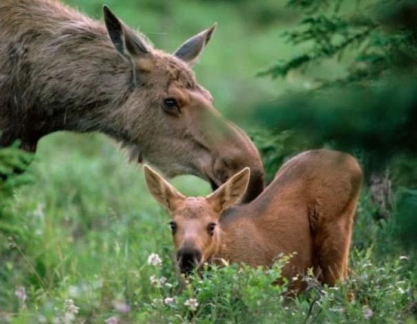 Ζώα με τα μικρά τους (58)