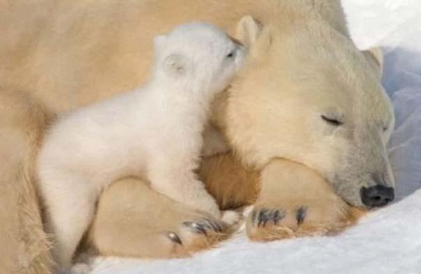 Ζώα με τα μικρά τους (61)