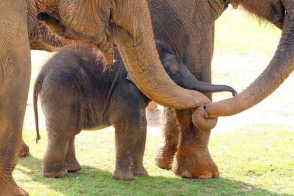 Ζώα με τα μικρά τους (63)
