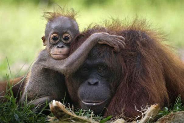 Ζώα με τα μικρά τους (65)