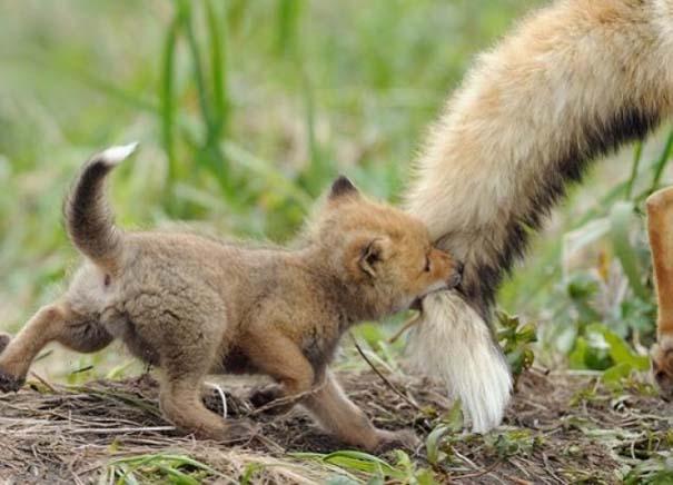 Ζώα με τα μικρά τους (70)
