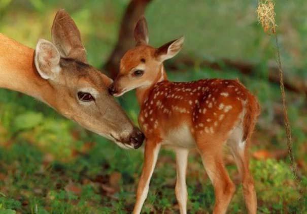 Ζώα με τα μικρά τους (72)