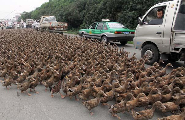 Οι 50 καλύτερες φωτογραφίες ζώων του 2012 (3)