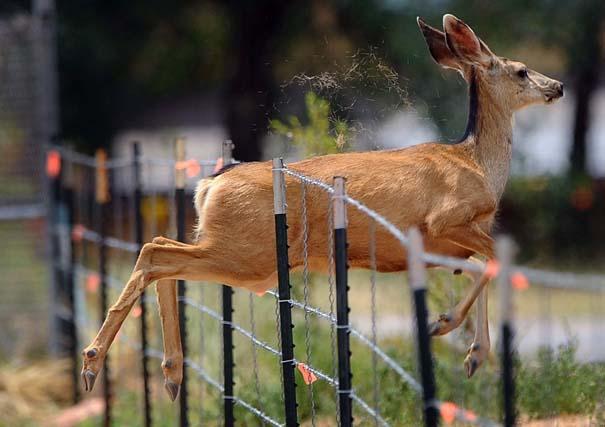 Οι 50 καλύτερες φωτογραφίες ζώων του 2012 (7)