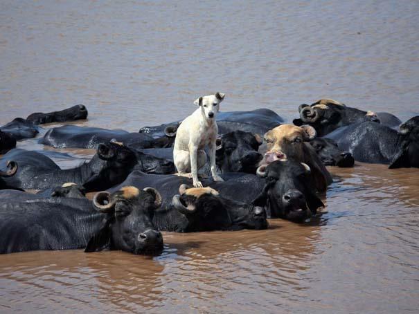 Οι 50 καλύτερες φωτογραφίες ζώων του 2012 (8)