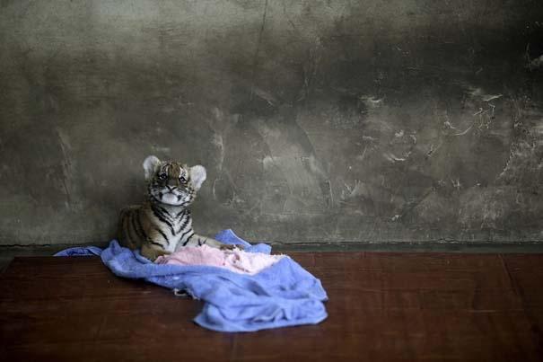 Οι 50 καλύτερες φωτογραφίες ζώων του 2012 (10)