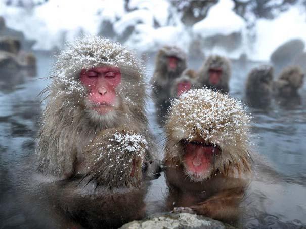 Οι 50 καλύτερες φωτογραφίες ζώων του 2012 (13)