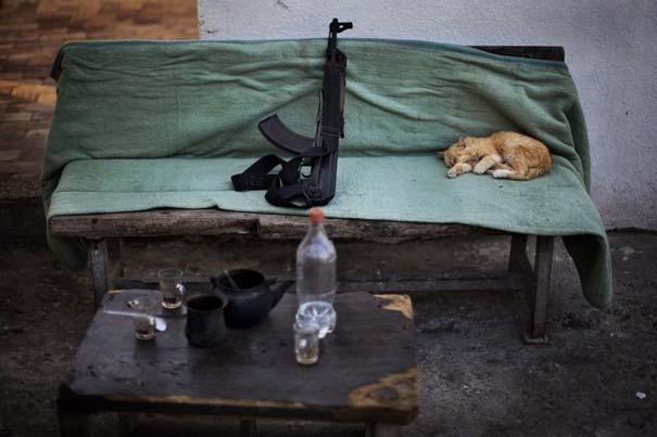 Οι 50 καλύτερες φωτογραφίες ζώων του 2012 (14)