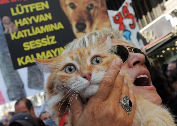 Οι 50 καλύτερες φωτογραφίες ζώων του 2012 (16)