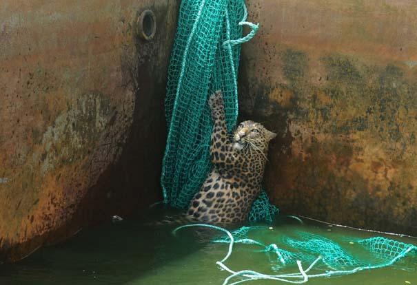 Οι 50 καλύτερες φωτογραφίες ζώων του 2012 (17)