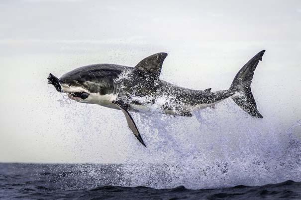 Οι 50 καλύτερες φωτογραφίες ζώων του 2012 (25)