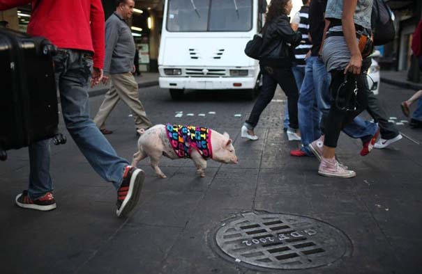 Οι 50 καλύτερες φωτογραφίες ζώων του 2012 (27)