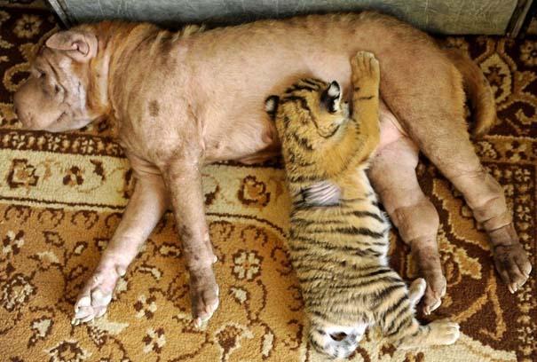 Οι 50 καλύτερες φωτογραφίες ζώων του 2012 (29)