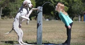 Οι 50 καλύτερες φωτογραφίες ζώων του 2012