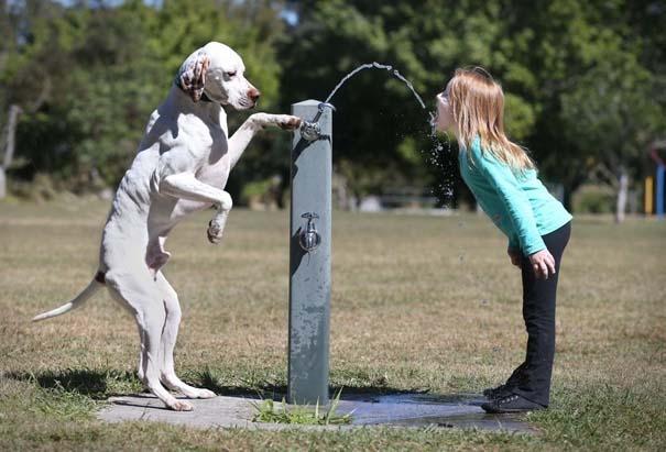 Οι 50 καλύτερες φωτογραφίες ζώων του 2012 (31)