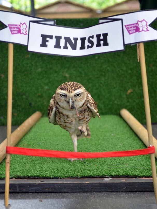 Οι 50 καλύτερες φωτογραφίες ζώων του 2012 (32)