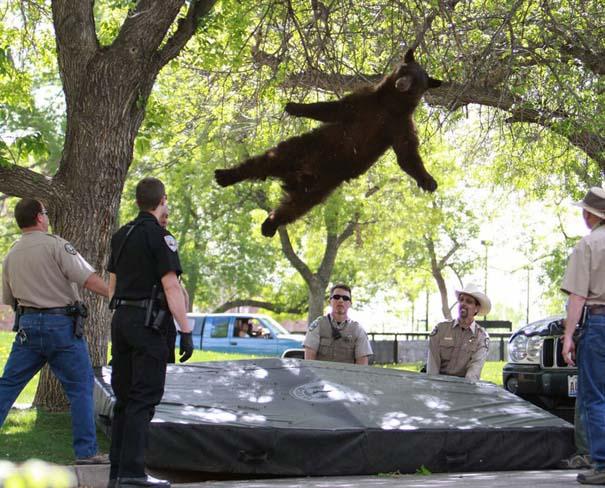 Οι 50 καλύτερες φωτογραφίες ζώων του 2012 (36)