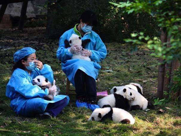 Οι 50 καλύτερες φωτογραφίες ζώων του 2012 (37)