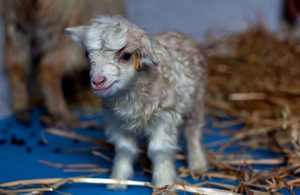 Οι 50 καλύτερες φωτογραφίες ζώων του 2012 (38)