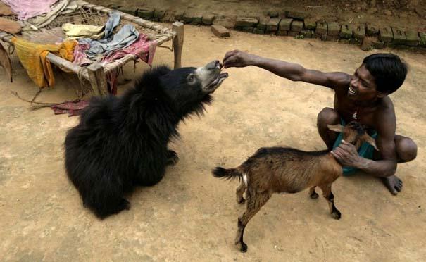 Οι 50 καλύτερες φωτογραφίες ζώων του 2012 (45)