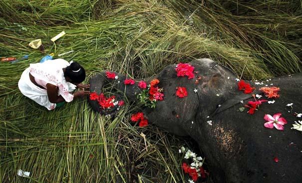 Οι 50 καλύτερες φωτογραφίες ζώων του 2012 (46)