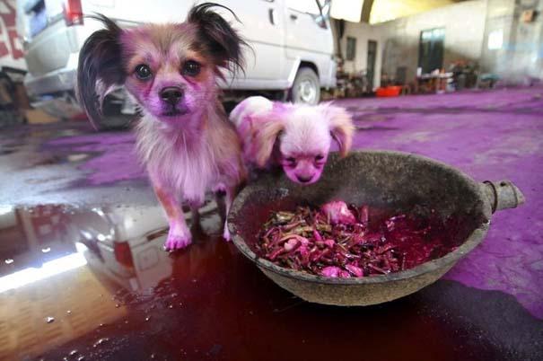 Οι 50 καλύτερες φωτογραφίες ζώων του 2012 (47)