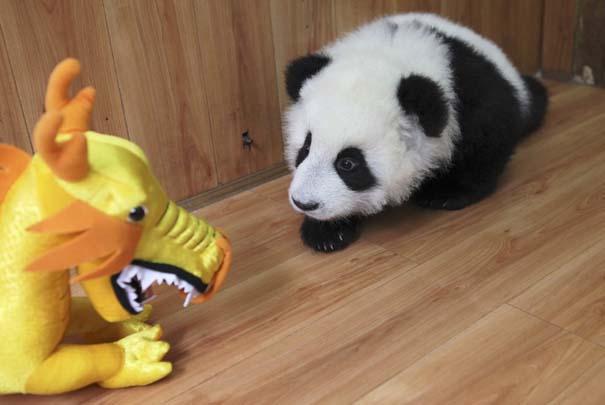 Οι 50 καλύτερες φωτογραφίες ζώων του 2012 (48)
