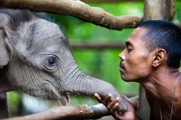 Οι 50 καλύτερες φωτογραφίες ζώων του 2012 (49)