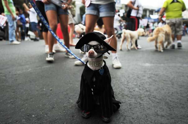 Οι 50 καλύτερες φωτογραφίες ζώων του 2012 (50)
