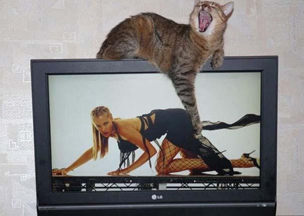 Αστείες φωτογραφίες από παράξενη γωνία λήψης (6)