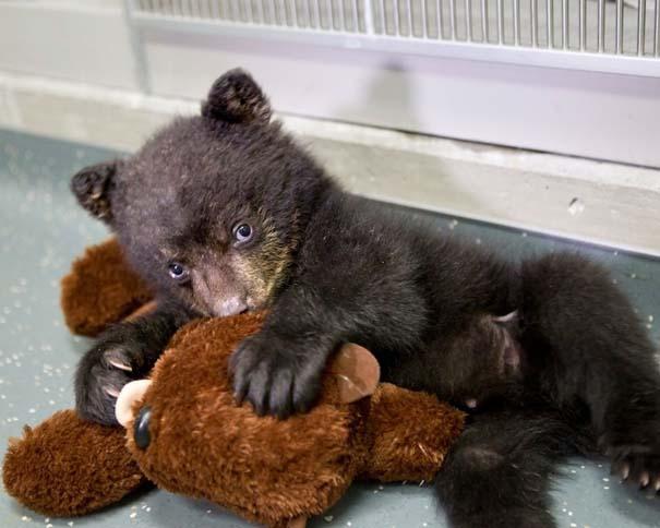 Οι πιο αξιολάτρευτες φωτογραφίες με μωρά ζώων του 2012 (1)