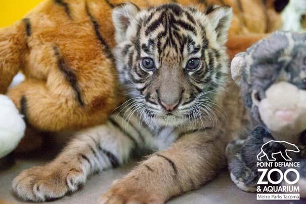 Οι πιο αξιολάτρευτες φωτογραφίες με μωρά ζώων του 2012 (2)