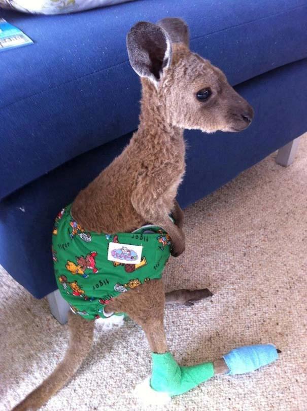 Οι πιο αξιολάτρευτες φωτογραφίες με μωρά ζώων του 2012 (3)