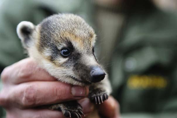 Οι πιο αξιολάτρευτες φωτογραφίες με μωρά ζώων του 2012 (4)