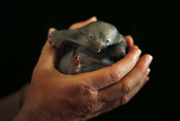 Οι πιο αξιολάτρευτες φωτογραφίες με μωρά ζώων του 2012 (8)