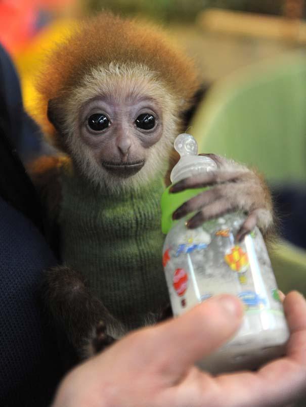 Οι πιο αξιολάτρευτες φωτογραφίες με μωρά ζώων του 2012 (10)