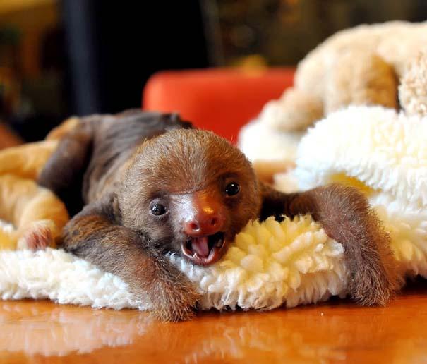 Οι πιο αξιολάτρευτες φωτογραφίες με μωρά ζώων του 2012 (11)